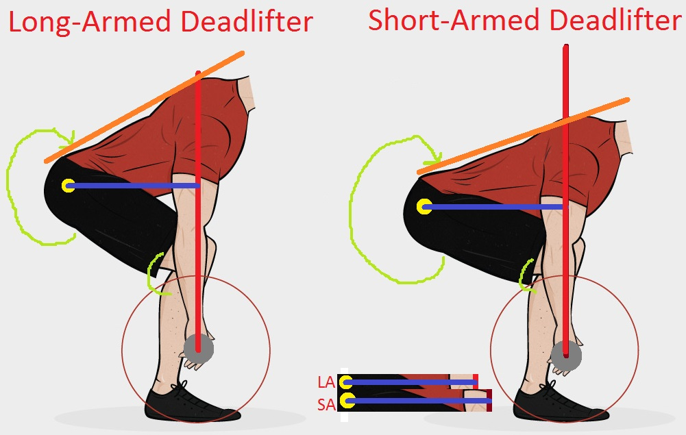 Note the back angle of each lifter marked by the orange line. The shorter your arms, the more horizontal you'll be in the starting position. Also note how literally every important moment arm or joint angle is worsened by having short arms.