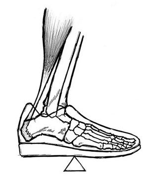 The mid-foot balance point. Photograph: Rippetoe, Mark (2012-01-13). Starting Strength (Kindle Location 377). The Aasgaard Company. Kindle Edition.