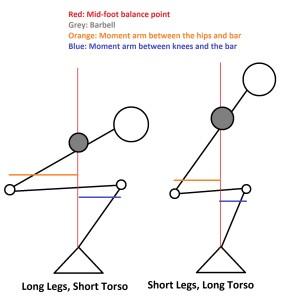 Short Torso vs Long Torso Squats