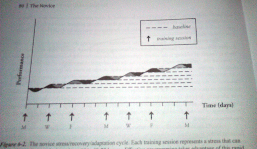 You can see that the novice goes through a full stress-recovery-adaptation cycle between each workout. Photo: Practical Programming 3rd Ed, Mark Rippetoe, 2014.